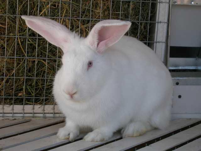 Кролики — это не только ценный мех