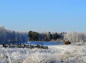 В Брянск пришла зима без снега