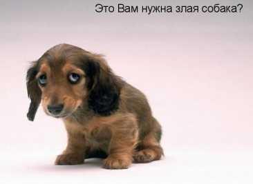 Чиновники назвали породы особо опасных домашних животных