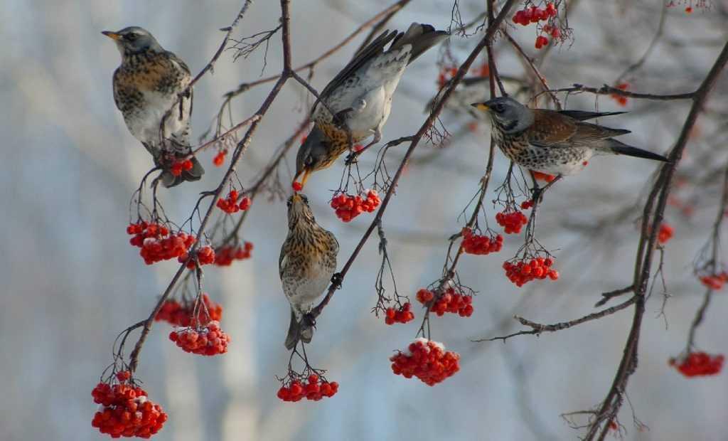 В Брянской области насчитали почти 100 видов птиц