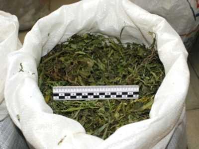 Брянские таможенники задержали украинца с марихуаной