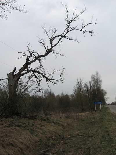 Брянцы выйдут на митинг против сокращения чернобыльского списка