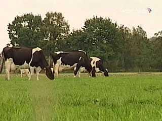 Обмеление брянских молочных рек ударило по безопасности страны