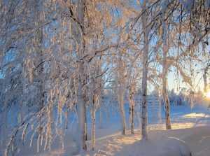 Брянщину ожидают снегопад, ледяной дождь и сильный ветер