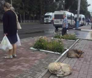 Областное правительство передаст брянской мэрии бездомных собак