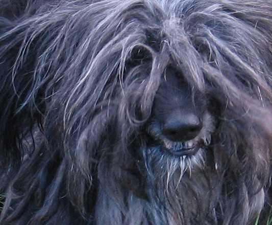 Брянские добровольцы объявили сбор, чтобы вызволить замурованных собак