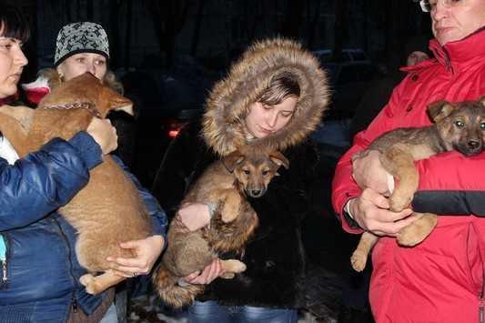 Брянские добровольцы вызволили замурованных щенков