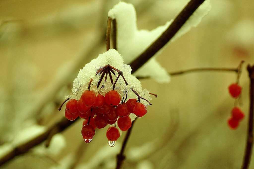 На Брянск надвигаются дожди и снегопады