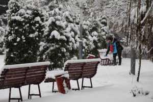 Новый год Брянск встретит без снега