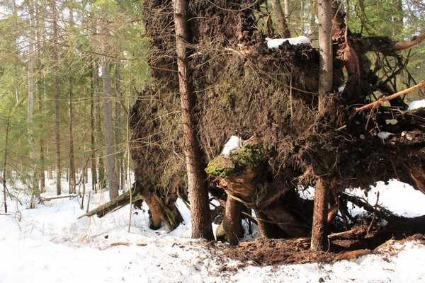 В Брянске 1 января потеплеет и выпадет немного снега