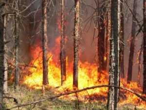 Брянского фермера наказали за нарушение противопожарного режима