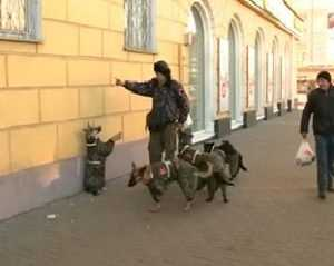 Бездомные животные зарабатывает себе на жизнь уличными выступлениями
