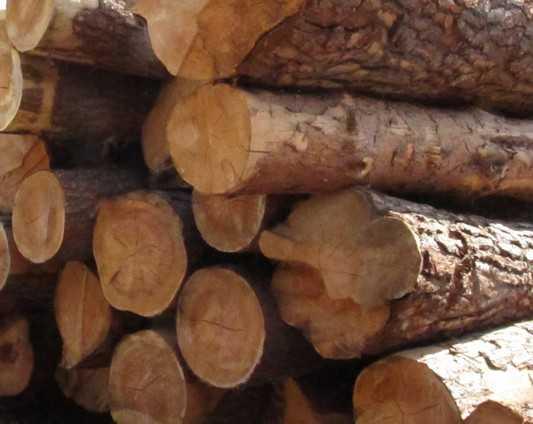 Брянского лесоруба убило сухое дерево