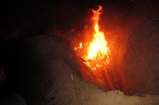 Брянские ветеринары сожгли в Севском районе 70 чумных свиней
