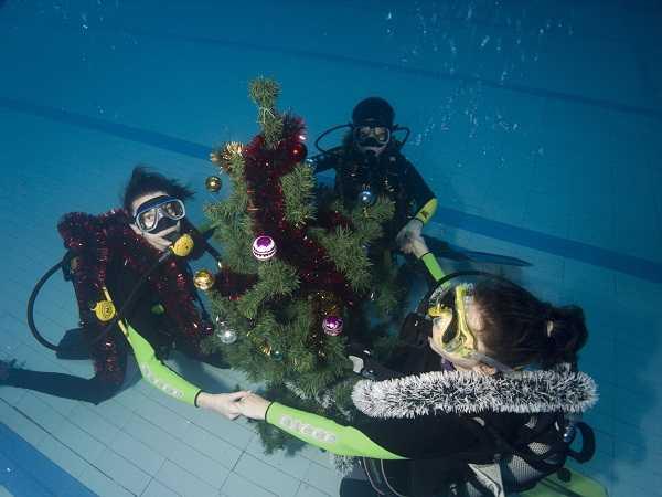 Брянские пловцы установили новогоднюю елку на дне бассейна