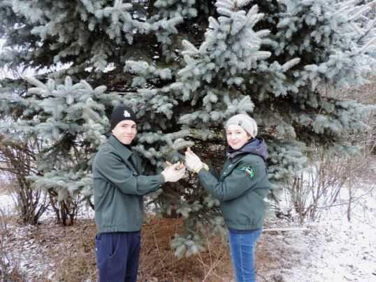 Брянские ребята посадят в школьном лесничестве голубые ели