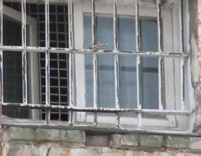Задержан со спиртным и телефоном сотрудник брянской колонии