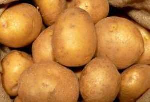 Голландский картофель повезут через Брянск