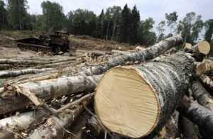 Брянского коммерсанта обвиняют в вырубке леса на 2 миллиона рублей
