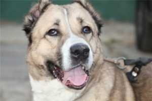 Очевидцы: возле брянского Metro собака покусала более 10 человек