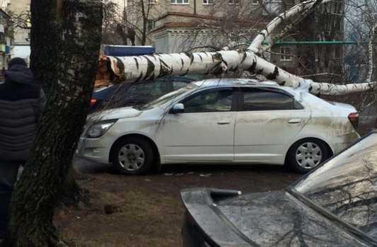 В Брянске рухнувшая от ветра береза придавила автомобили