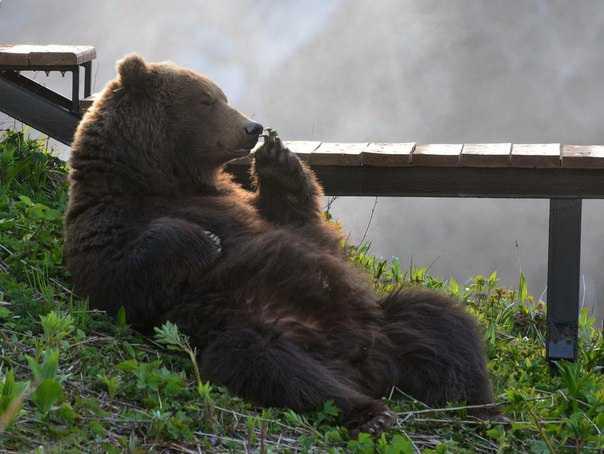 Брянску покажут выставку о медведях и Камчатке