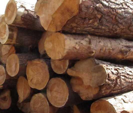 Брянских лесопромышленников обвинили в пожирании субсидий