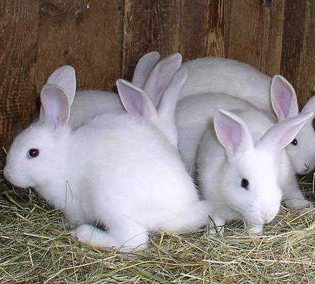 Брянская станция стала поворотным пунктом в судьбе кроликов Яценюка