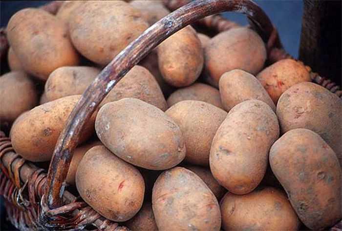 Брянская область вошла в картофельную пятерку России