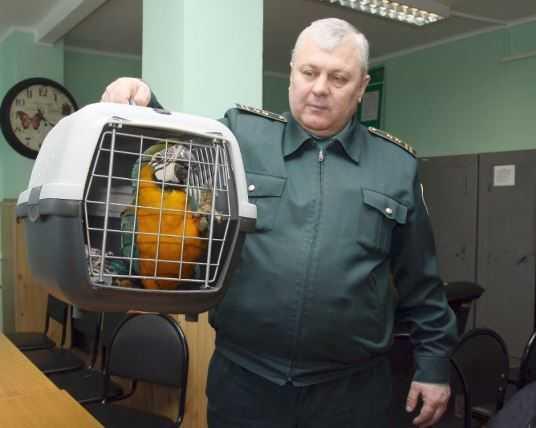 Брянские таможенники вернули Украине 11 попугаев-нелегалов