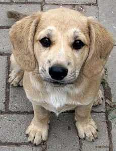 Под Брянском обнаружили множество жестоко отравленных собак
