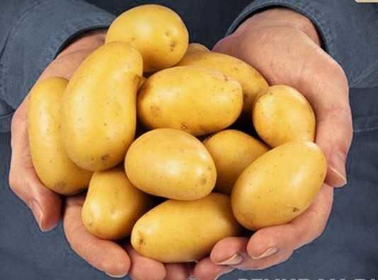 Брянцы запретили ввозить немецкий картофель по 100 рублей за килограмм