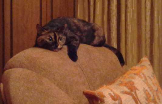 Возбуждено дело против брянца, убившего кошку на глазах у мальчика