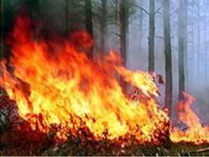 Для предотвращения пожаров брянцам запретили ходить в лес