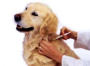 В Брянске проведут бесплатную вакцинацию домашних питомцев