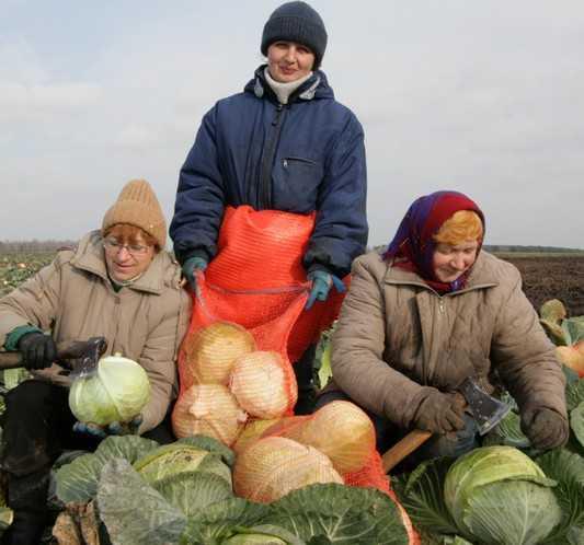 Сельхознаследство бывшего брянского губернатора привело власть в ужас