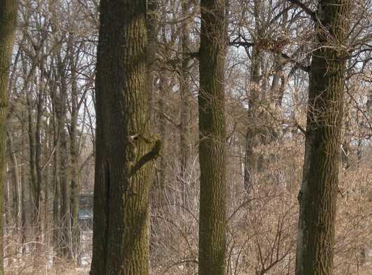 На брянской границе ставленник Касацкого вырубил дубовую рощу