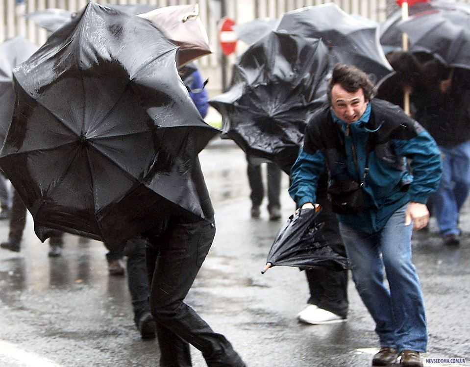Предстоящая неделя в Брянской области будет дождливой
