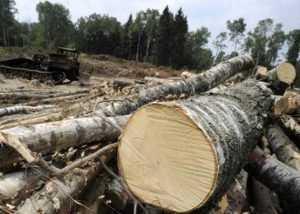 Сотрудников брянской фирмы обвиняют в вырубке леса на 6,5 миллионов