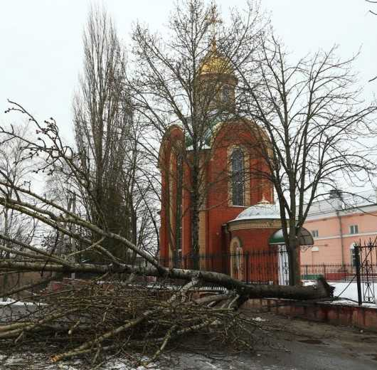 В Брянске сильный ветер поломал деревья
