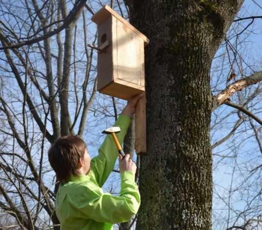 Брянские школьники смастерили сотни скворечников ко Дню птиц