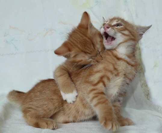 Брянцам покажут фотовыставку, посвящённую зубрам и мартовским котам