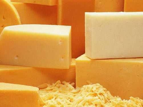 Брянские молочные фермы подвели сыроделов под контроль