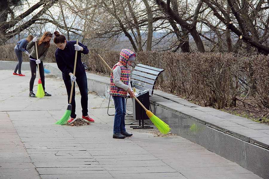 Брянские «зелёные» очистили Покровскую гору от мусора и опасных деревьев