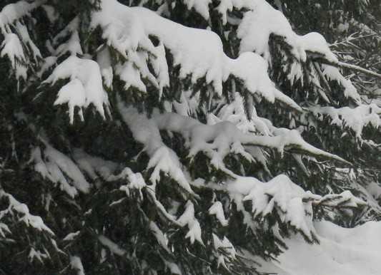 На юге Брянской области повалил снег