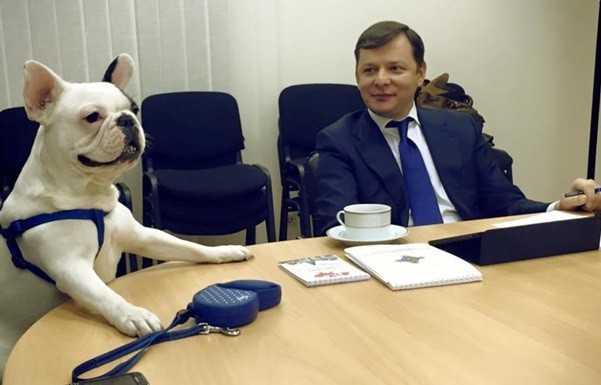 Бульдога партии Ляшко подготовили к депутатству в украинской Раде