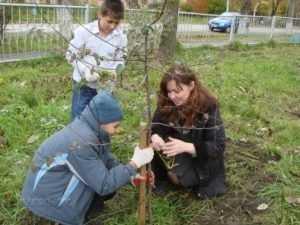 В честь каждого новорожденного брянца будут сажать дерево