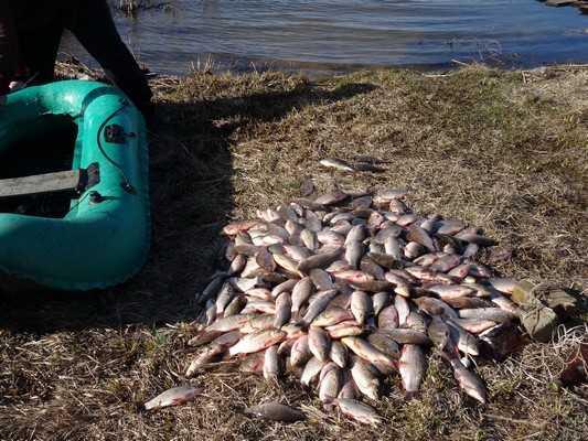 На брянских реках и озерах закишели браконьеры
