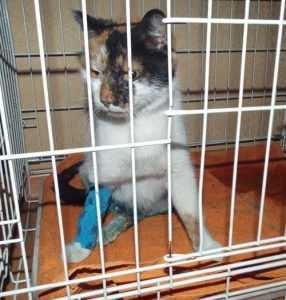 Растерзанной псом кошке отрезали лапу, брянцы обратились к прокурору