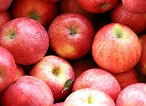 С брянской границы белорусам вернули 100 тонн польских яблок